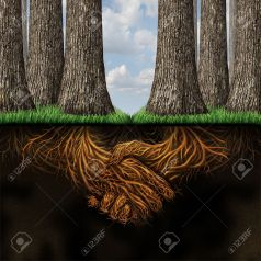 29198647-Team-agreement-business-partners-concept-as-two-groups-of-trees-coming-together-in-friendship-and-co-Stock-Photo