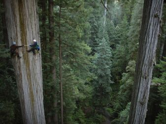 scientists-redwood-nichols_52779_990x742