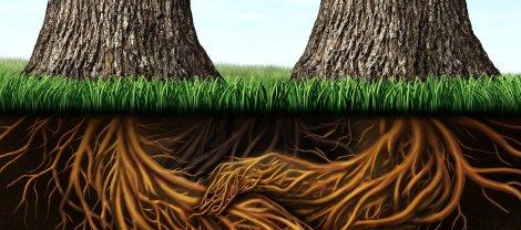 trees_cut1
